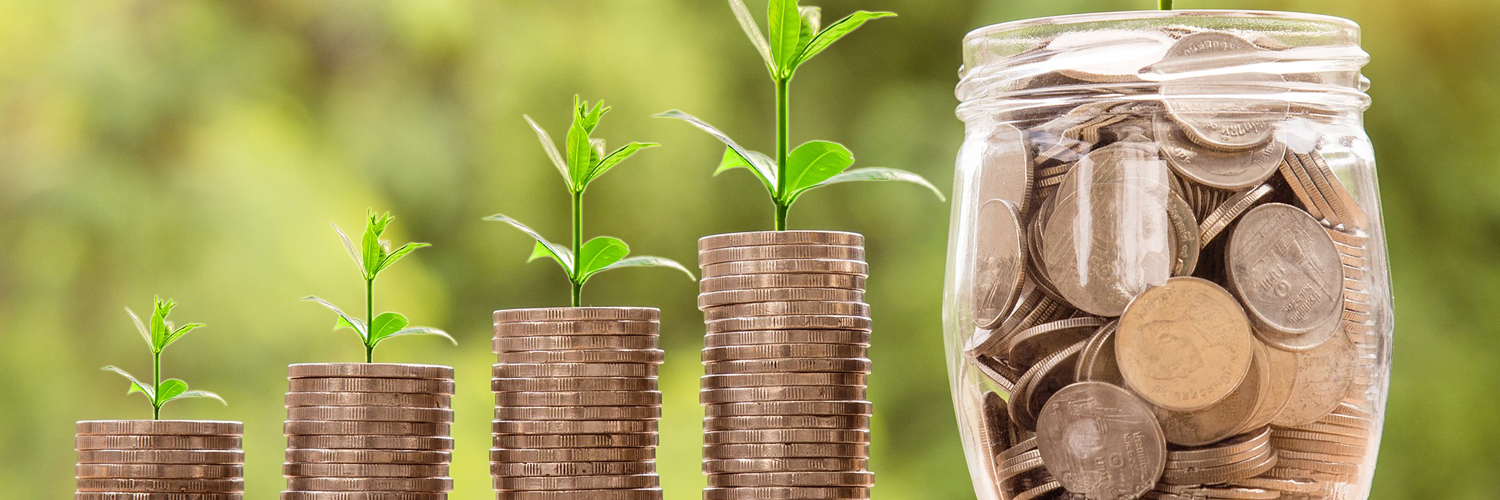 Planting and Nurturing your Business in India